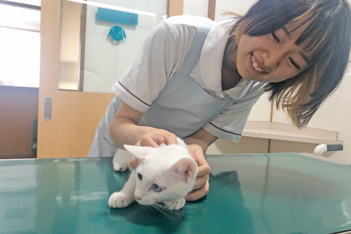 動物看護師求人